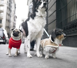 Dogs walking in a city