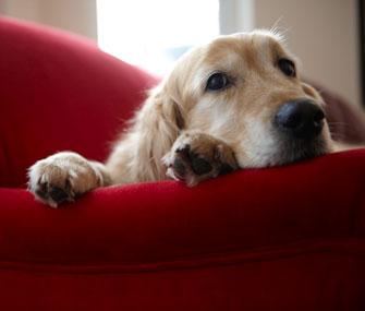 Dog Getting Comfortable