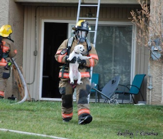 Firefighter Walter Sanders carries a white puppy from an apartment fire in Maryland.