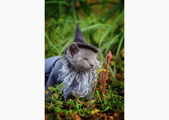 Wendy McKee photo of kitten in Gandolf costume