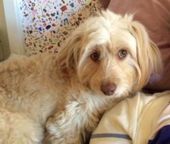 @lenadunham Tweeted Ellen Page this photo, asking her to rename her dog. The name? Miranda.