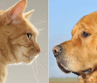 pet dogs vs. pet cats essay