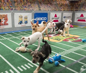 Puppies take to the field at Puppy Bowl IX.