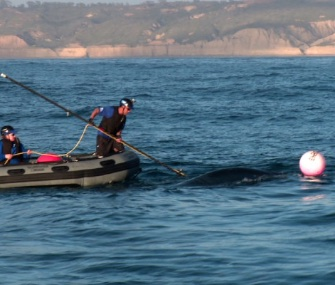 A team from SeaWorld San Diego came to the rescue of a young humpback whale who was entangled in fishing line.