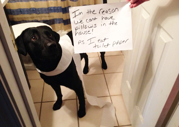 Dog Eats Toilet Paper