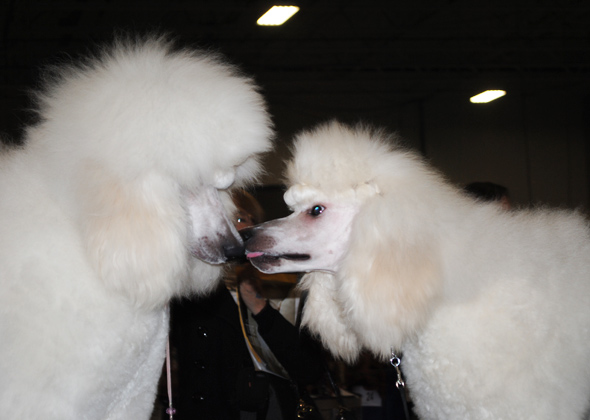 Cruise and Abigail at the National Dog Show