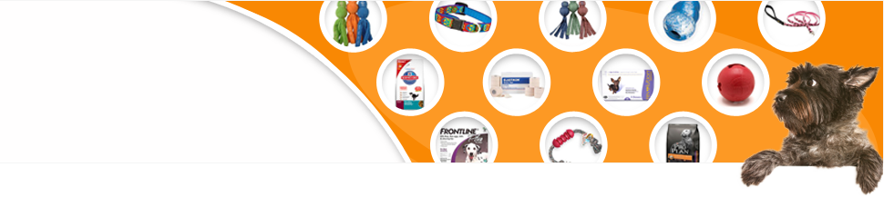 A small dog admires an array of great pet products.