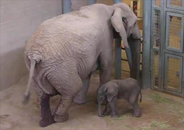 elephant Reid Park Zoo