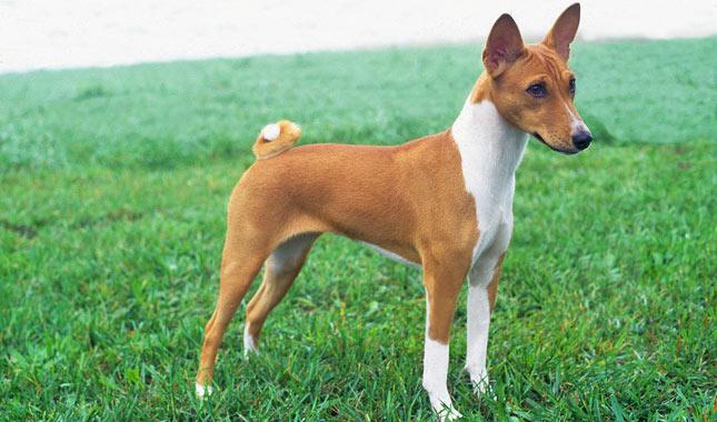 Vet Advice On Dog Breeds