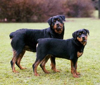 Small Body Big Head Dog