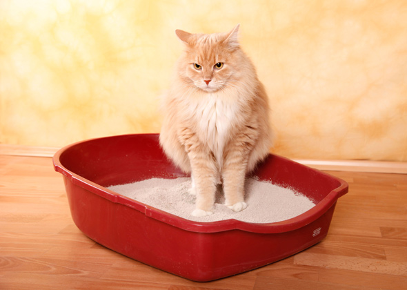 Getting Cat To Use Litterbox
