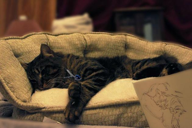 Titanic Movie Scene with Cat