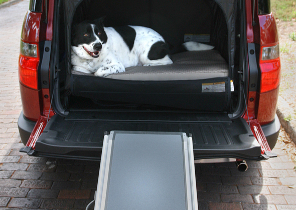 Car ramp for senior dog