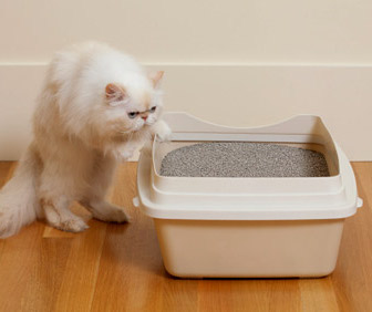 Cat getting into litter box