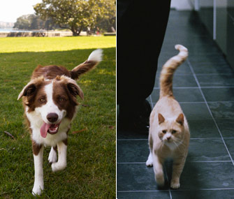 Why Are Dogs And Cats Ears Split