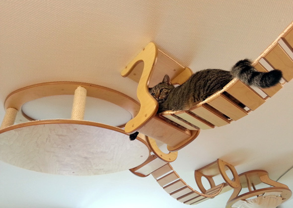 designer creates amazing playgrounds for cats
