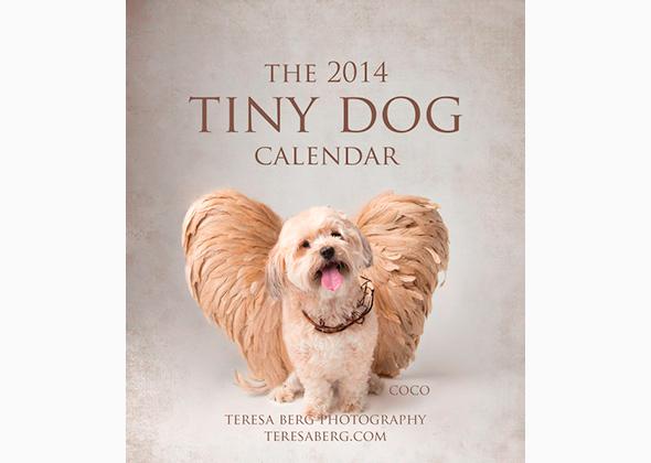 Calendars 2014: Tiny Dogs