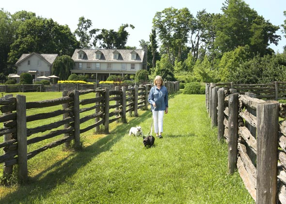 Martha Stewart walking her French Bulldogs