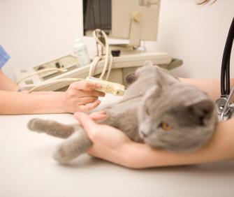 Cat seeing vet specialist