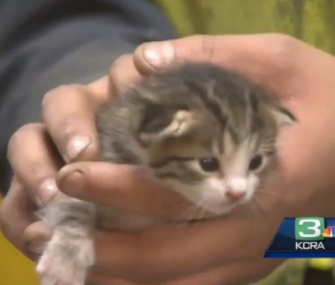 Recycling plant worker Tony Miranda holds the tiny kitten he saved from a conveyor belt.
