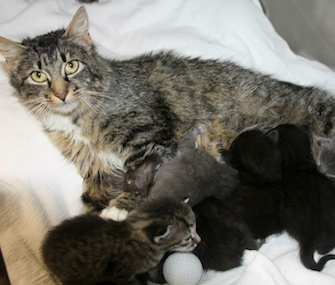 Six kittens have a surrogate mom after being found at a dump in Maine.