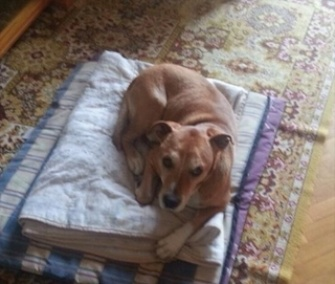 A campaign to save Excalibur, a dog belonging to a Spanish Ebola patient, has gone viral.