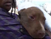 Pit Bull puppy saved from fire