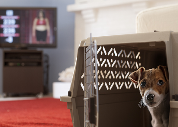 Things in the Home That Scare Pets Biggest Loser Scale