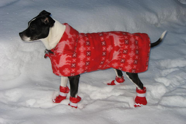 10 Cute Pets Wearing Sweaters