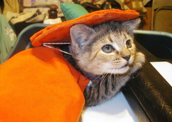 Cat as Pumpkin