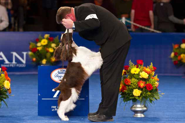 Group Winners at The National Dog Show Presented by Purina