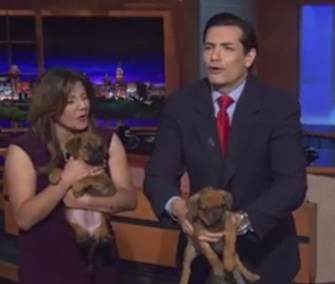 Thistle the puppy had a little accident when KENS 5 anchor Mat Garcia was holding him on live TV.