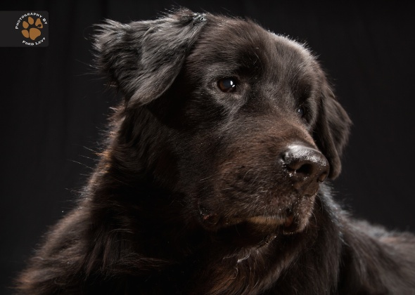 Newfoundland, Black Dogs Project by Fred Levy
