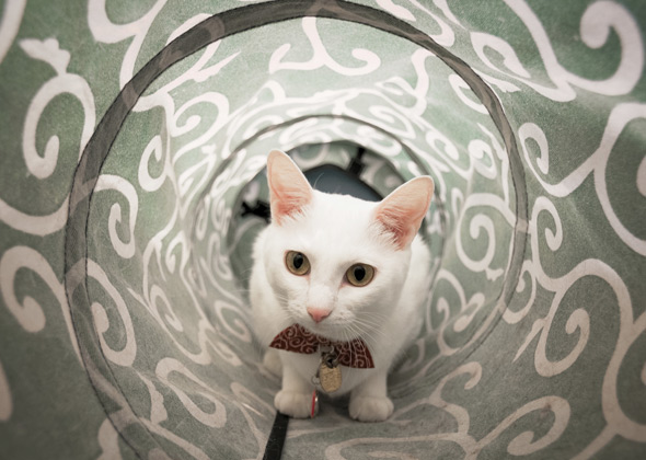 Cat in Tunnel