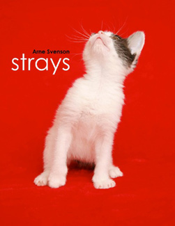 Strays Cover