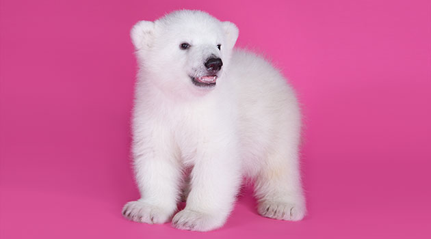 The cub poses for a photo shoot at 3 months old.