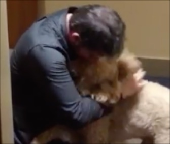 A happy reunion between Goldendoodle Kramer and his owner was caught on video this week.