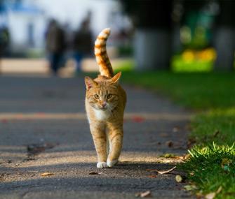 Cat Roaming