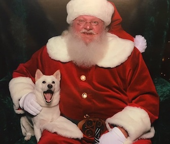 Kya, a Shiba Inu, was thrilled to meet Santa Claus in her local mall.