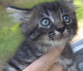 "A ""lucky"" kitten escapes the Texas floods and survives a 3-hour ride under the hood of a car."