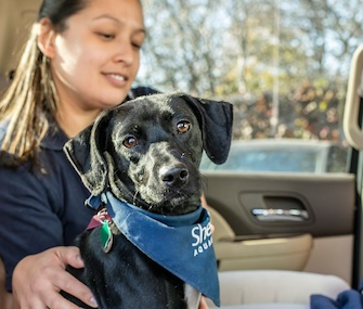 Peach the rescue dog is getting a second chance at life at the Shedd Aquarium in Chicago.