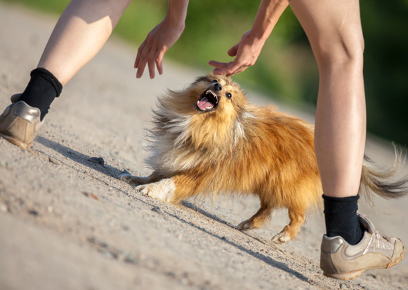 How To Train Your Dog Not To Growl
