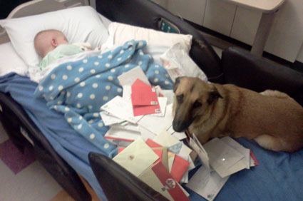 boy and dog in hospital bed