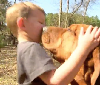 Three-year-old Eli Alcock is now buddies with Honey, the hunting dog who found him in the woods.