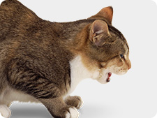 Cat coughing