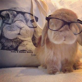bunnymama Rambo Hipster Bunny