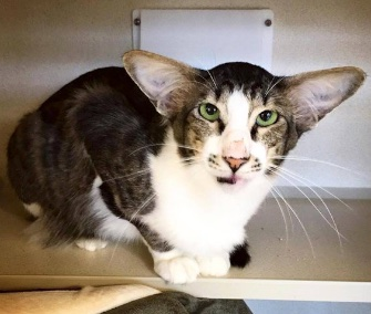 Kylo Ren was quickly adopted from a New Jersey shelter after his photo went viral.