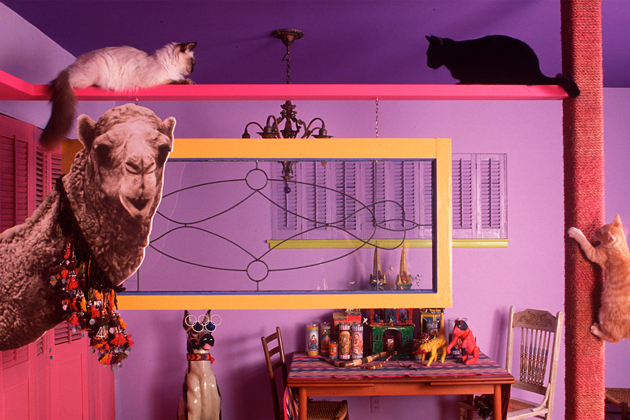 Welcome to Bob Walker's Feline Fun House