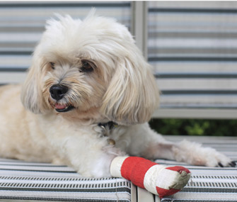 Dog wearing bandage on leg