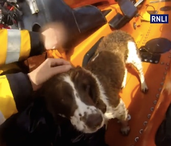 A lifeboat crew rescues Sprig from a 30-foot ledge in England.